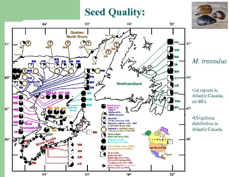 Seed Quality: M. trossulus • 1 st reports in Atlantic Canada; mi-80's • Ubiquitous