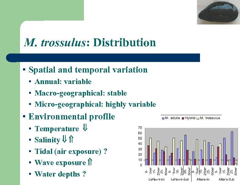 M. trossulus: Distribution ▪ Spatial and temporal variation ▪ Annual: variable ▪ Macro-geographical: stable