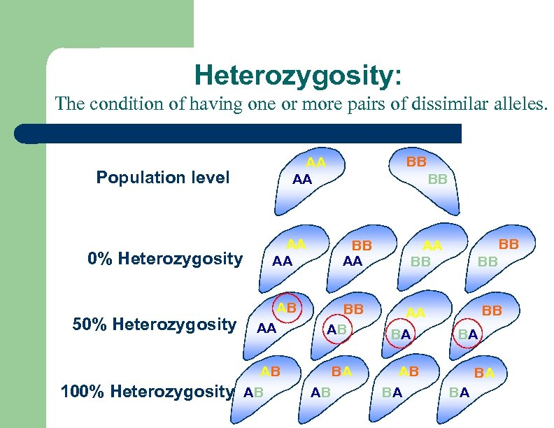 Heterozygosity: The condition of having one or more pairs of dissimilar alleles. Population level