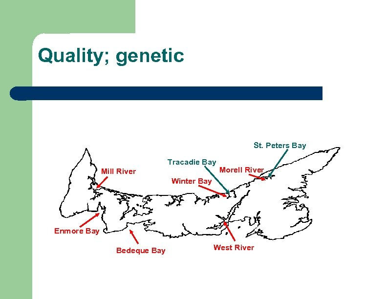 Quality; genetic St. Peters Bay Tracadie Bay Mill River Morell River Winter Bay Enmore