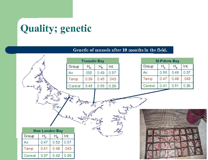Quality; genetic Genetic of mussels after 10 months in the field. Int. St-Peters Bay