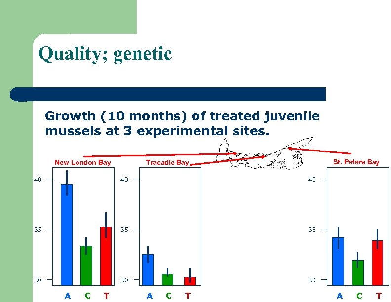 Quality; genetic Growth (10 months) of treated juvenile mussels at 3 experimental sites. New