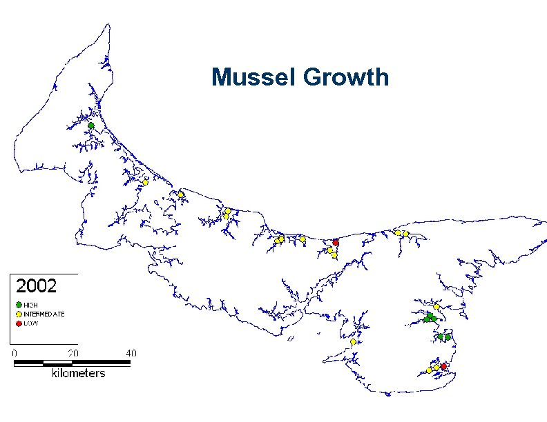 Mussel Growth