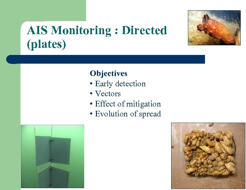 AIS Monitoring : Directed (plates) Objectives • Early detection • Vectors • Effect of