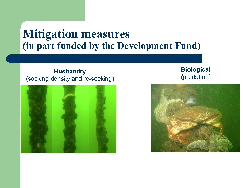 Mitigation measures (in part funded by the Development Fund) Husbandry (socking density and re-socking)