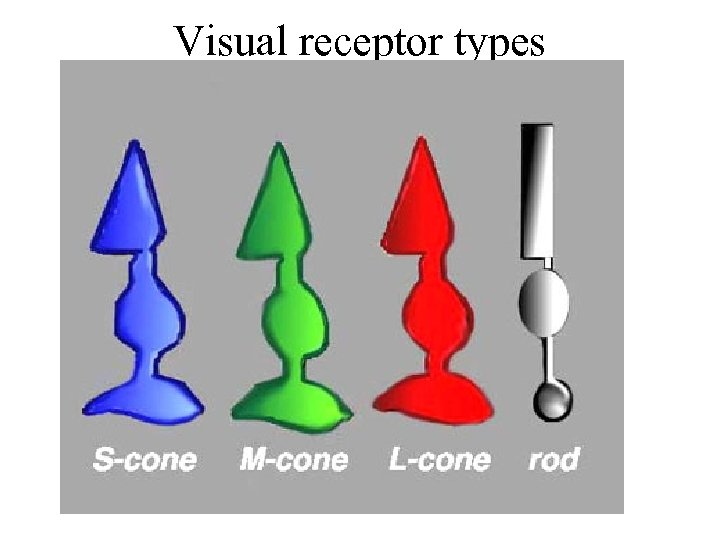 Visual receptor types