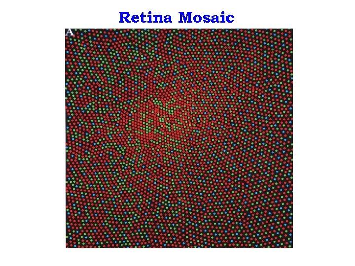 Retina Mosaic