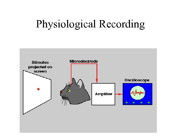 Physiological Recording