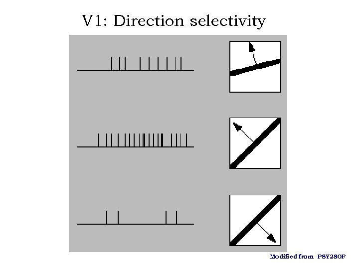 V 1: Direction selectivity Modified from PSY 280 F
