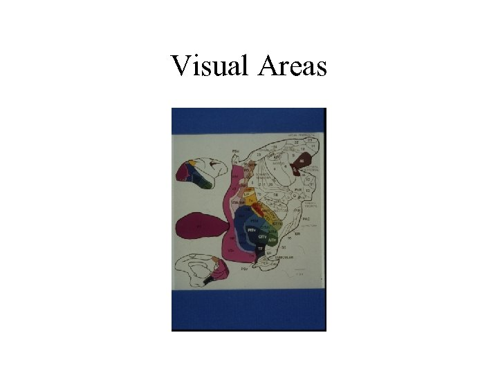 Visual Areas