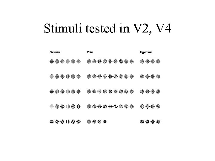 Stimuli tested in V 2, V 4