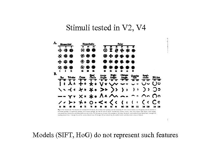 Stimuli tested in V 2, V 4 Models (SIFT, Ho. G) do not represent