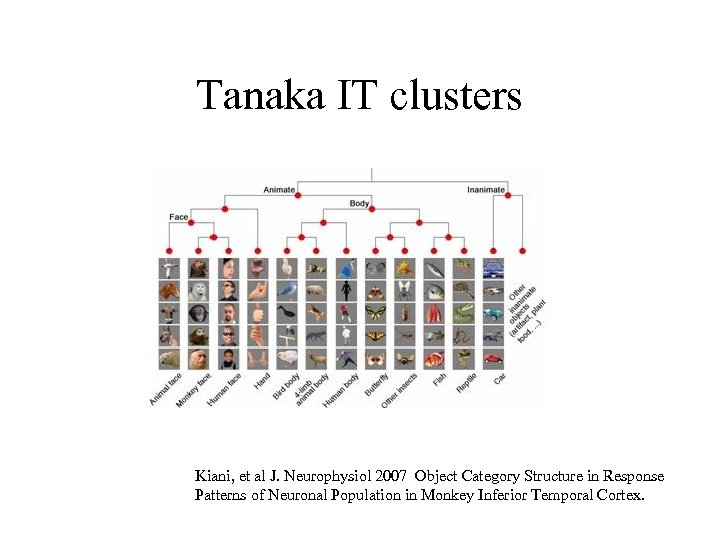 Tanaka IT clusters Kiani, et al J. Neurophysiol 2007 Object Category Structure in Response