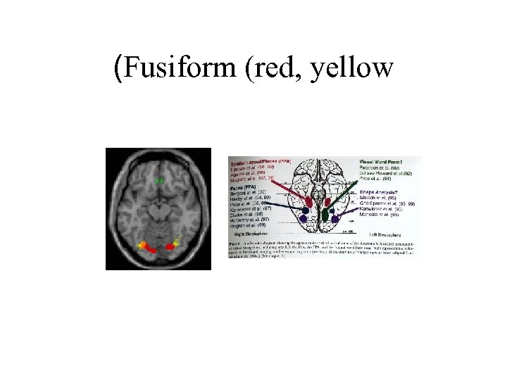 (Fusiform (red, yellow