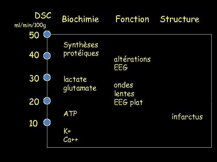 DSC ml/min/100 g 50 40 30 Biochimie Synthèses protéiques lactate glutamate 20 10 ATP