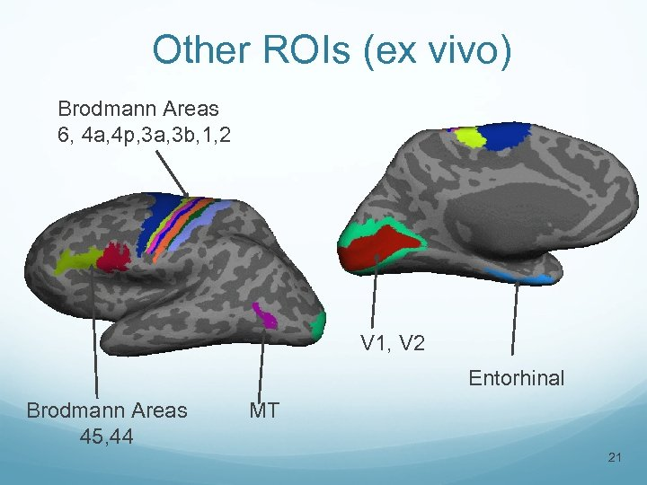 Other ROIs (ex vivo) Brodmann Areas 6, 4 a, 4 p, 3 a, 3