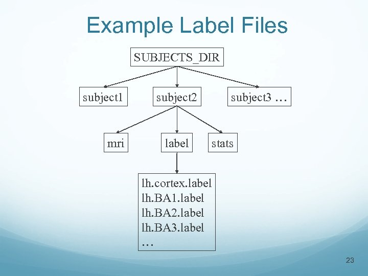 Example Label Files SUBJECTS_DIR subject 1 mri subject 2 label subject 3 … stats