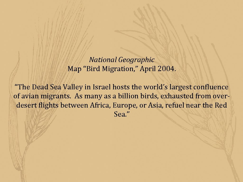 """National Geographic Map """"Bird Migration, """" April 2004. """"The Dead Sea Valley in Israel"""