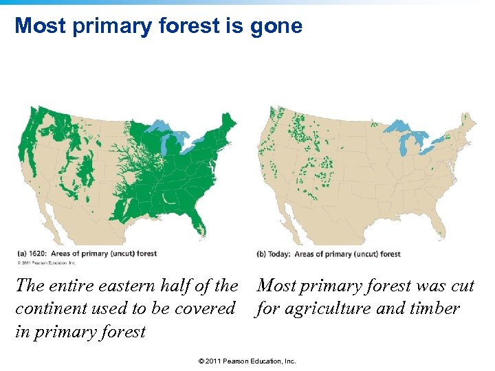 Most primary forest is gone The entire eastern half of the continent used to