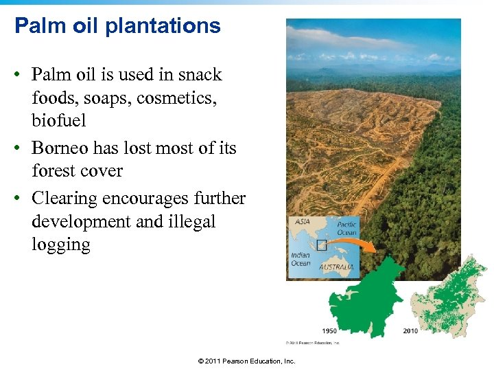 Palm oil plantations • Palm oil is used in snack foods, soaps, cosmetics, biofuel