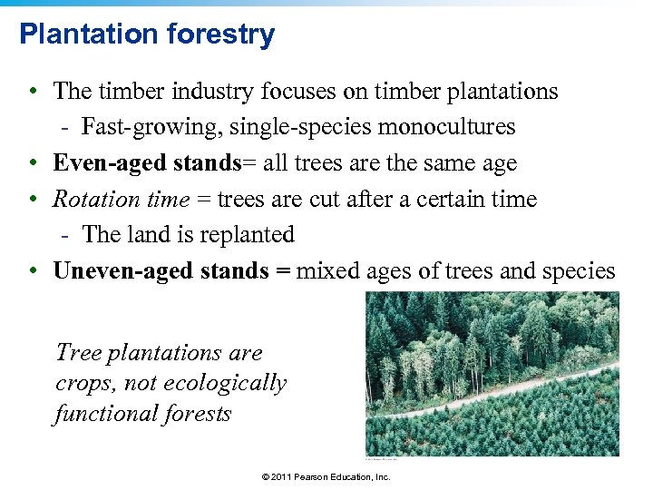 Plantation forestry • The timber industry focuses on timber plantations - Fast-growing, single-species monocultures