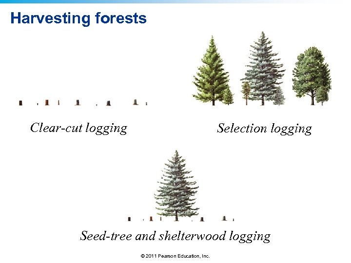 Harvesting forests Clear-cut logging Selection logging Seed-tree and shelterwood logging © 2011 Pearson Education,