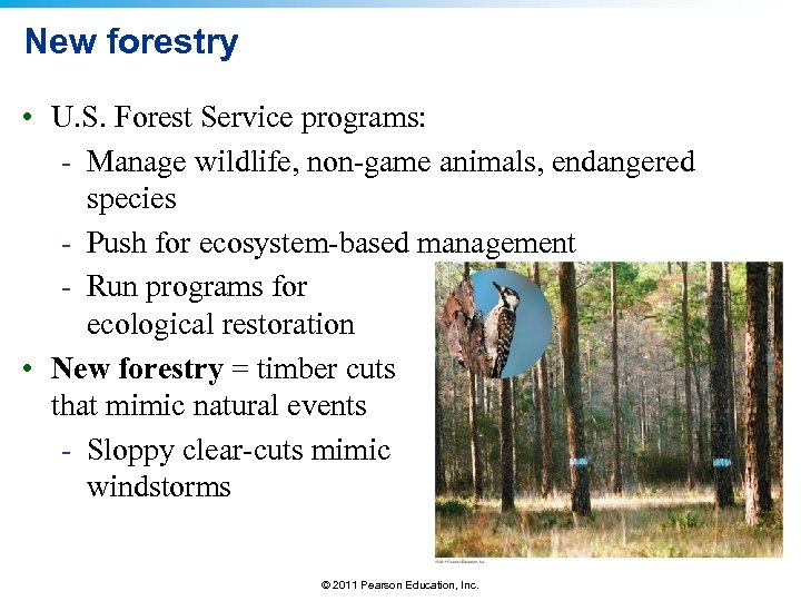 New forestry • U. S. Forest Service programs: - Manage wildlife, non-game animals, endangered