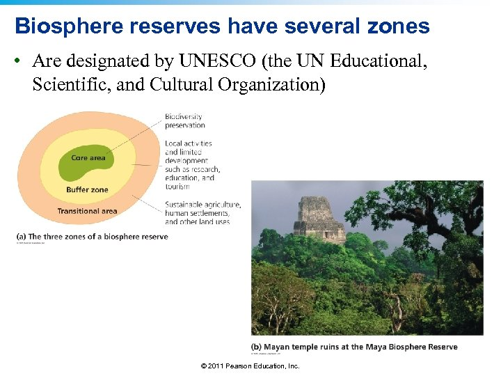 Biosphere reserves have several zones • Are designated by UNESCO (the UN Educational, Scientific,