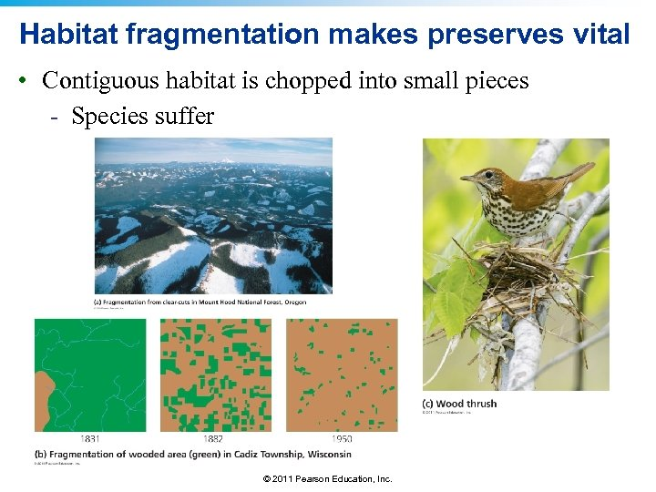 Habitat fragmentation makes preserves vital • Contiguous habitat is chopped into small pieces -