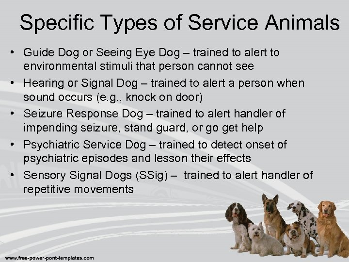 Specific Types of Service Animals • Guide Dog or Seeing Eye Dog – trained