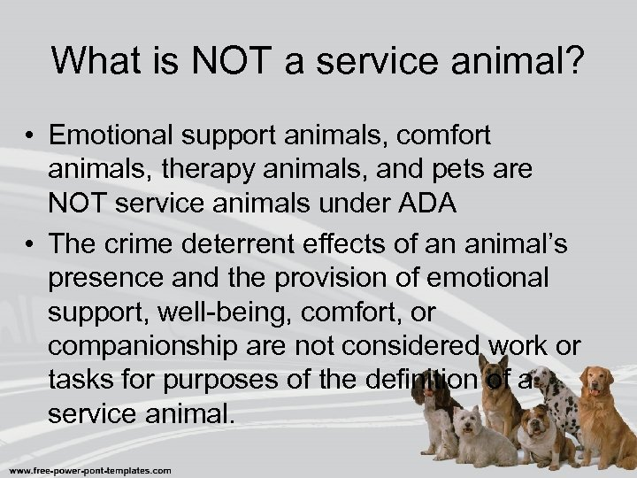 What is NOT a service animal? • Emotional support animals, comfort animals, therapy animals,