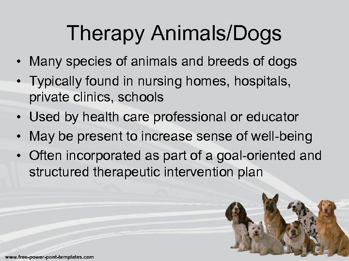 Therapy Animals/Dogs • Many species of animals and breeds of dogs • Typically found