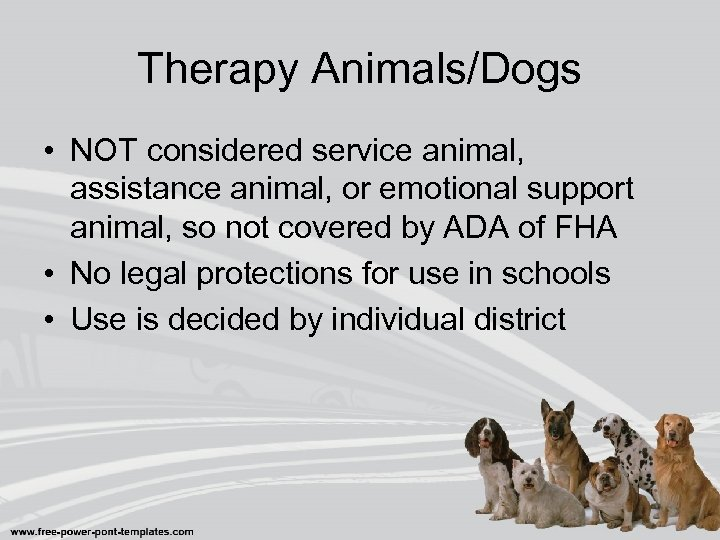 Therapy Animals/Dogs • NOT considered service animal, assistance animal, or emotional support animal, so