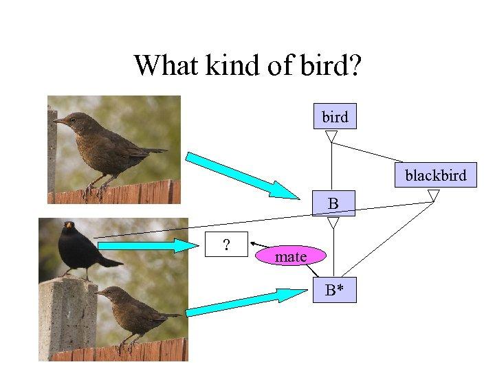 What kind of bird? bird blackbird B ? mate B*