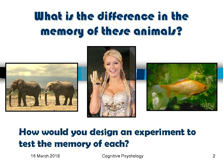 What is the difference in the memory of these animals? How would you design