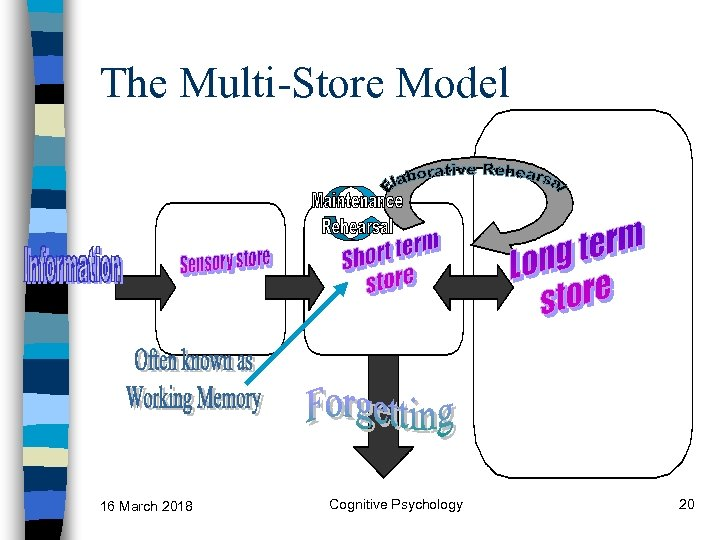 The Multi-Store Model 16 March 2018 Cognitive Psychology 20