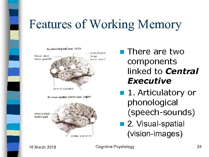 Features of Working Memory There are two components linked to Central Executive n 1.
