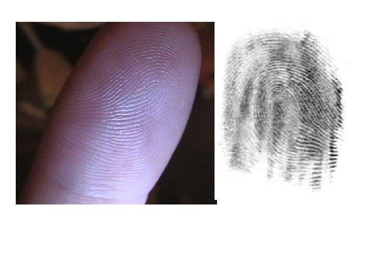 Patent/Latent Fingerprint No two fingerprints have ever been found identical
