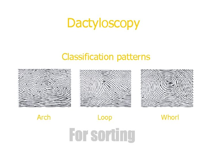 Dactyloscopy Classification patterns Arch Loop Whorl