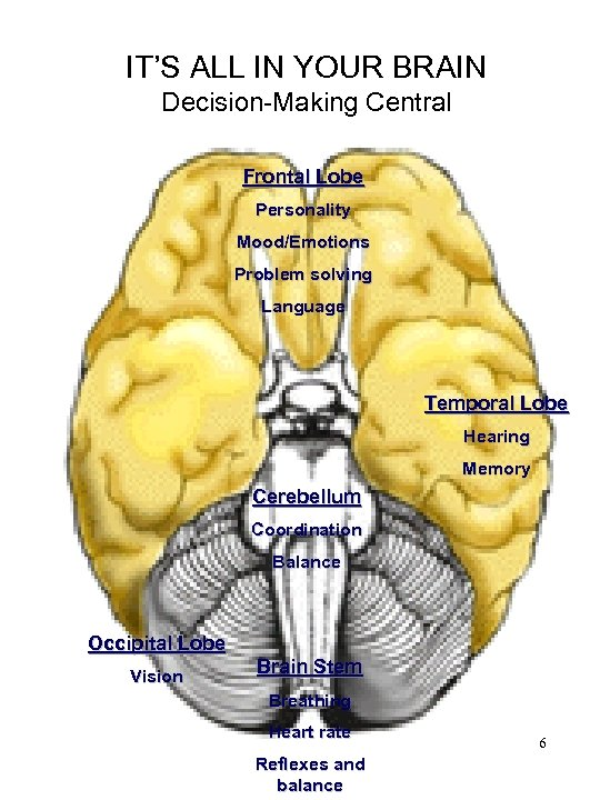 IT'S ALL IN YOUR BRAIN Decision-Making Central Frontal Lobe Personality Mood/Emotions Problem solving Language