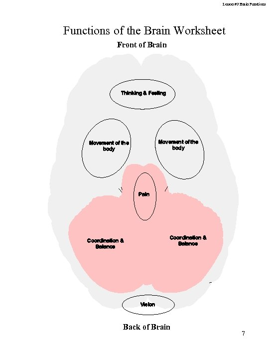 Lesson #2 Brain Functions of the Brain Worksheet Front of Brain Thinking & Feeling