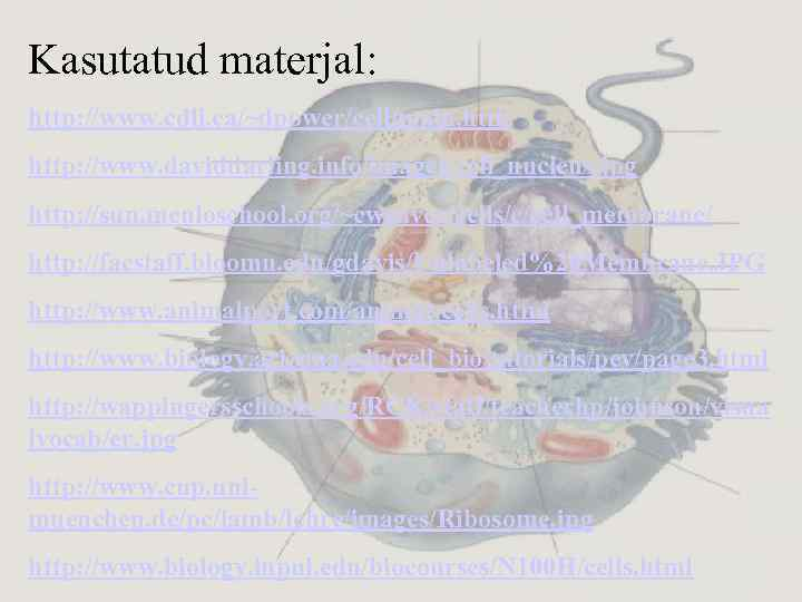 Kasutatud materjal: http: //www. cdli. ca/~dpower/cell/main. htm http: //www. daviddarling. info/images/cell_nucleus. jpg http: //sun.