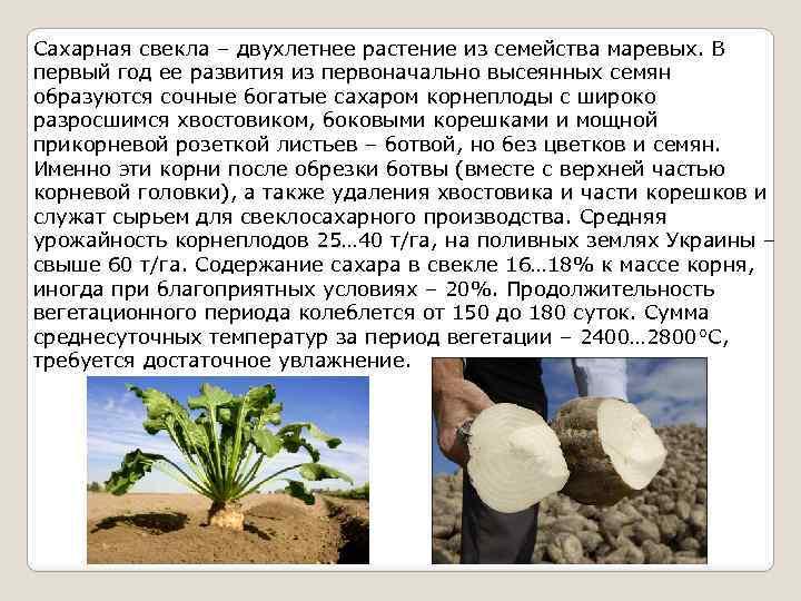 Для выращивания сахарной свеклы 960
