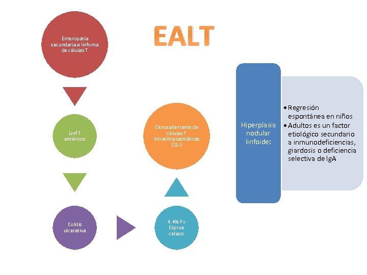 Enteropatía secundaria a linfoma de células T EALT Linf T entéricos Clona aberrante de