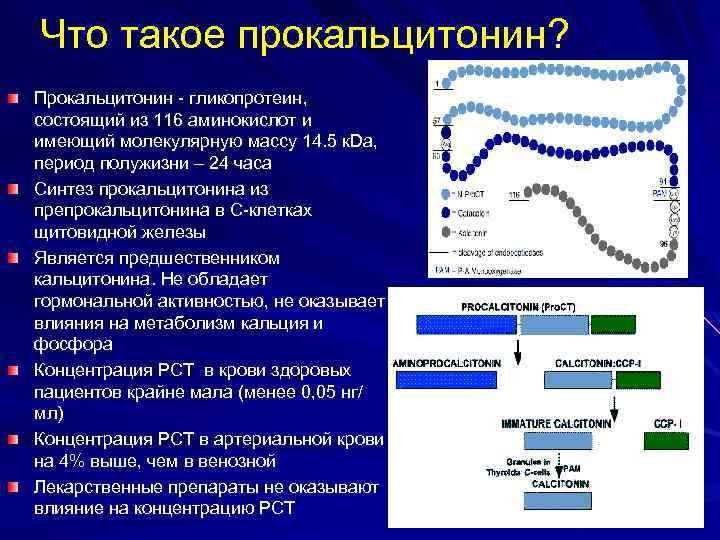 Что такое прокальцитонин? Прокальцитонин - гликопротеин, состоящий из 116 аминокислот и имеющий молекулярную массу