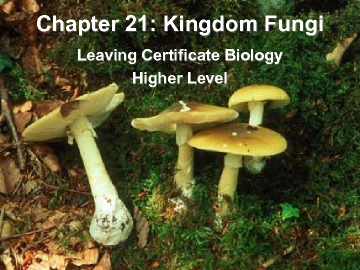 Chapter 21: Kingdom Fungi Leaving Certificate Biology Higher Level
