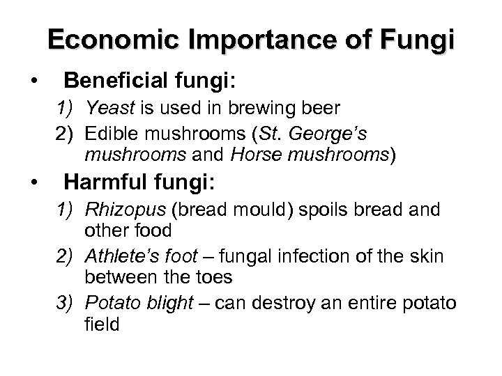 Economic Importance of Fungi • Beneficial fungi: 1) Yeast is used in brewing beer