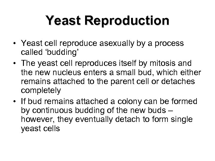 Yeast Reproduction • Yeast cell reproduce asexually by a process called 'budding' • The
