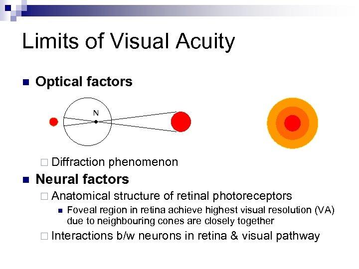 Limits of Visual Acuity n Optical factors N ¨ Diffraction n phenomenon Neural factors