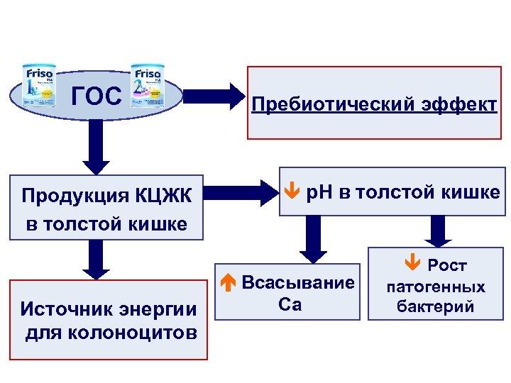 ГОС Продукция КЦЖК в толстой кишке Пребиотический эффект p. H в толстой кишке Всасывание